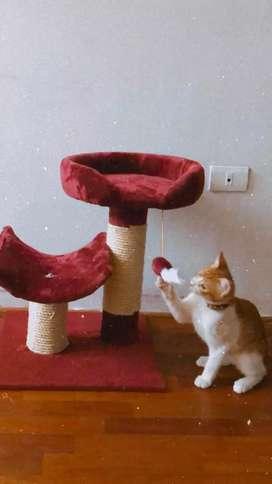 Camas y casitas lindas para gatos