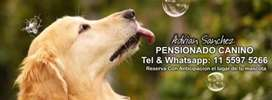 Hospedaje Canino en Caseros