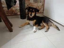 Benji. Hermoso cachorrito tamaño pequeño ennadopción