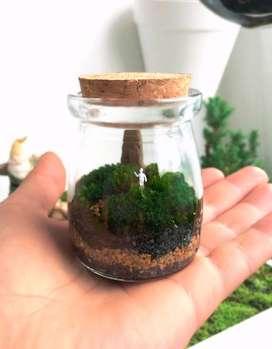 MIni Terrario de Musgo con Figura Humana en Miniatura