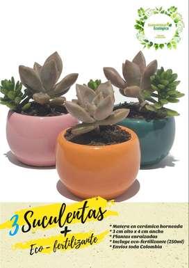 3 Suculentas + Ecofertilizante + Envío