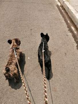 Correas dobles para mascotas y correas normal una sola mascota