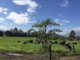Hermosa Hacienda en Machachi 44 Has