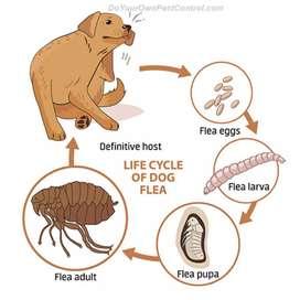 apartamentos y casas con pulgas-acaros en mascotas Fumigacion con Aspersion Bogota (alergias)