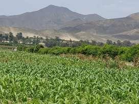 VENTA DE TERRENO EN LA ZONA AGRICOLA EL HATILLO, CHANCAY, HUARAL