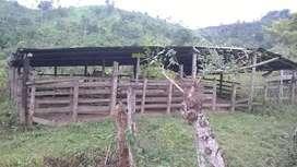 Propiedad Cacaotera de 60 hectáreas en Esmeraldas