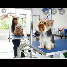 Empleo para estilista canino