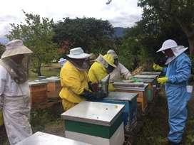 Miel de abejas floracion tropical por mayor