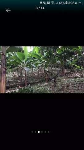 De OPORTUNIDAD Vendo Finca 10 hectáreas(Ngble)