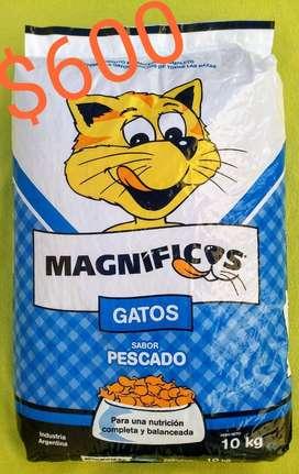 Alimento balanceado  gato 10 kg envío sin cargo