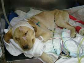 CUIDADOS INTENSIVOS para Mascotas Veterinaria en Palmira Sanicans