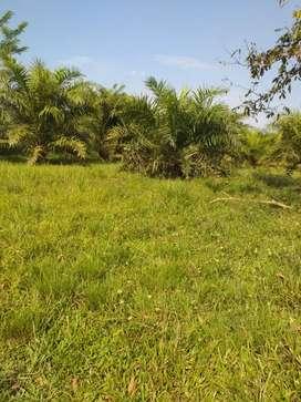 Se VENDE o  ALQUILA Hacienda o Finca ganadera en Sucumbios