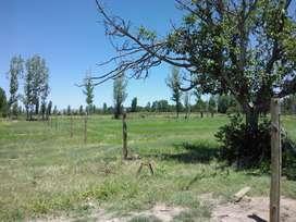 30x70m - Cuadro Benegas - San Rafael - Mendoza