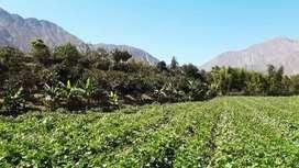 Vendo Terreno Agrícola o Rural en Zúñiga - Cañete - Lima