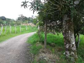 VENDO PERMUTO LOTE 1000m2 EN MESITAS CUNDINAMARCA