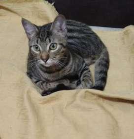 Hermoso gato en adopcion