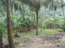 Se vende 19 hectáreas  en buritaca