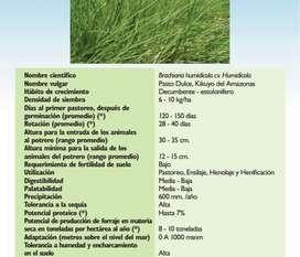 Venta de brachiaria humidicola y llanero dictyoneura