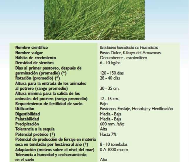 Venta de brachiaria humidicola y llanero dictyoneura 0