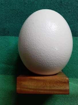 Artesanía de Huevo de Avestruz