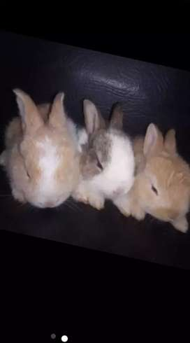 Conejos PEQUEÑOS
