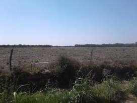 Venta Campo agricola zona Obispo Trejo - Córdoba