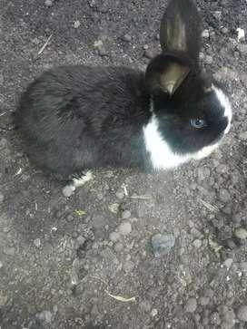 Conejos  de 45 dias