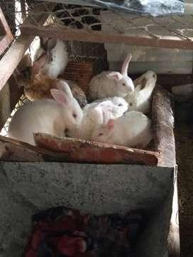 Vendo  conejos motivo viaje
