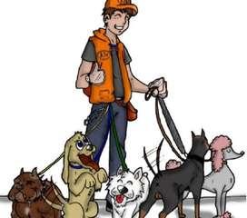 Se ofrece para pasear perros de cualquier rincon de la ciudad