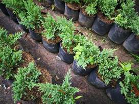 Venta de tierra,Cesped,Suculentas,Cactus,Jardineros,Viveros,Eugenia y jardineria.