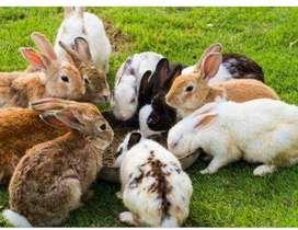 Venta Conejos