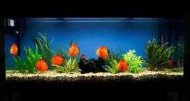 Venta de acuarios y todo en peces ornamentales