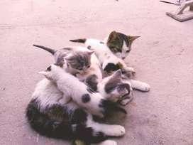 Se gan gatitos en adopción