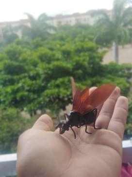 Hormiga Culona Artesanía
