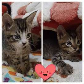 Gaticos an adopción muy responsable