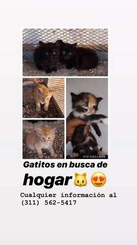 Gatitos sanos buscan hogar