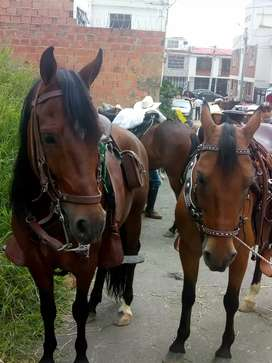 Se venden dos caballos de 5 y 7 años