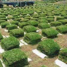 GRAS NATURAL  - HUANCAYO
