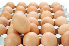 Huevos de campo. Súper frescos. De animales de granja. Muy nutritivos. Yema naranja.