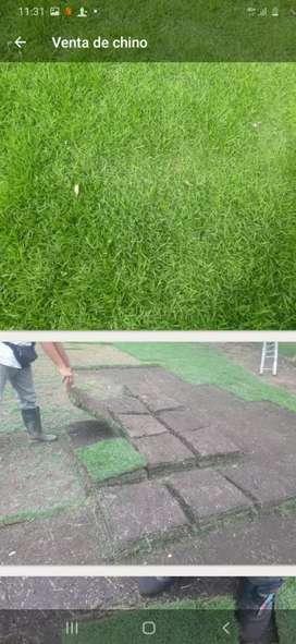 Venta de grama