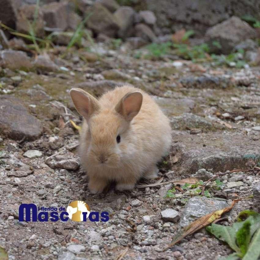 Conejos ,hamster,cobayos Y Curis 0