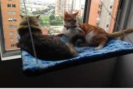 Hamacas Colgante para Gatos