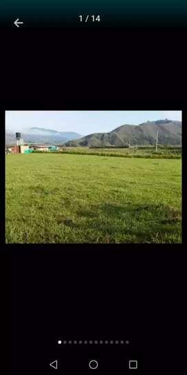 Lote en urrao 2500 metros planos vereda San jose