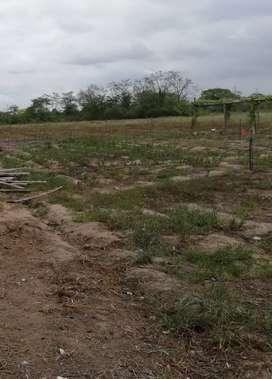 Venta de lote 20 x 500 en Arenillas vía principal del sitio barbasco