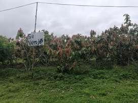 Se vende dos lotes de terreno  en Quinsaloma
