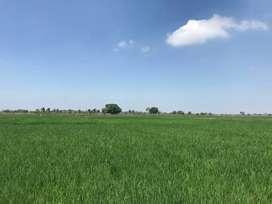 Vendo propiedad 40,5 hectáreas vía Palestina Vinces