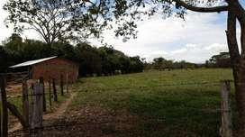Venta finca 23 hectáreas en Pore - Casanare, vereda bocas de Pore