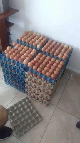 Panales de huevos