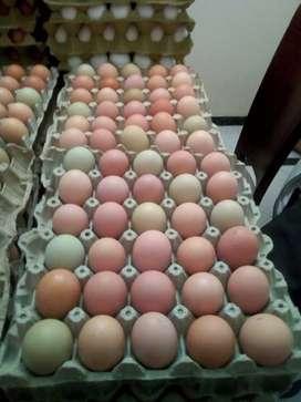 Huevo Criollo 100% Natural