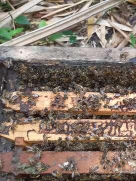 Venta de miel de abeja